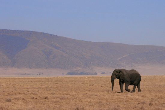 Travel Story, Experience | Kenya, Africa. Traveler's experience visiting Kenya to see elephants.